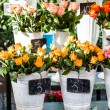 Stock Photo: Colorful flowers in flower shop on market