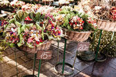 Colorful flowers in a flower shop on a market — Stock Photo