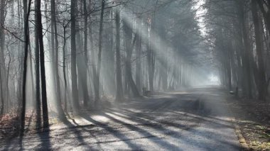 Road and sunbeams in strong fog in the forest, Poland. — Stock Video