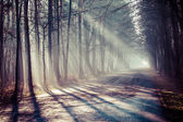 Road and sunbeams in strong fog in the forest, Poland. — Stock Photo