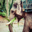 Stock Photo: Elephant close up
