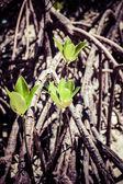 Mangroves in Andaman beach, India — Stock Photo