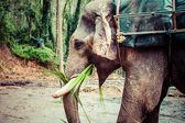 大象关门 — 图库照片