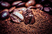 Coffee bean on macro for background — Stock Photo