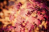 Hojas rojas en otoño — Foto de Stock