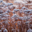 Frozen plant with selective focus — Stock Photo #40086987