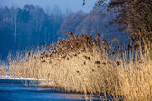 Traditional polish landscape in winter, frozen lake. — Stock Photo