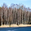 Winter time landscape lake and birch trees, Poland — Stock Photo #40239607