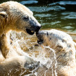 Polar bears fighting  — Stockfoto #42546407