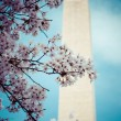 Washington DC cherry blossom with lake and Washington Monument. — Stock Photo #44808841