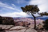 Grand Canyon National Park, Arizona — Stock Photo