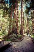 Redwood national park in california, usa  — ストック写真