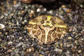 Frog in natural habitat  — Stock Photo