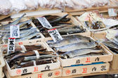Fish Market, Japan.  — Stock Photo