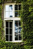 Pencere ile yeşil sarmaşık kaplı — Stok fotoğraf