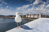 Seagull on opera house in Oslo, Norway — Stock Photo