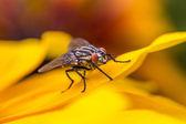 Insecte macro mouche sur la feuille jaune — Photo