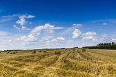 Hay bales on the field after harvest, Poland  — Stock Photo