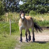 Horses in Suwalki Landscape Park, Poland. — 图库照片