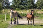 Horses in Suwalki Landscape Park, Poland. — Stock Photo