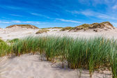 Moving dunes park near Baltic Sea in Leba, Poland — Stock Photo