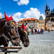 Horse Carriage waiting for tourists at the Old Square in Prague. — Stock Photo #51656807