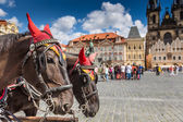Horse Carriage waiting for tourists at the Old Square in Prague.  — ストック写真