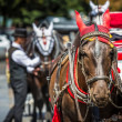 Horse Carriage waiting for tourists at the Old Square in Prague. — Stock Photo #51775609