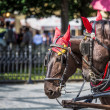 Horse Carriage waiting for tourists at the Old Square in Prague. — Stock Photo #51775617