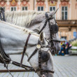 Horse Carriage waiting for tourists at the Old Square in Prague. — Stock Photo #51775991