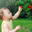 Stock Photo: Beautiful baby girl picking ash berry outdoors on summer gre