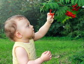 Beautiful baby girl picking the ash berry outdoors on summer gre — Stock Photo