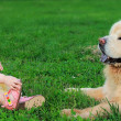 Beautiful small baby girl looking on big dog sitting on grass ou — Stock Photo #12621485