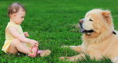 Beautiful small baby girl looking on big dog sitting on grass ou — Stock Photo