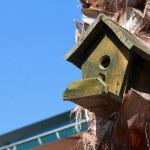 Wood bird house on tree palm on beautiful blue sky background — Stock Photo