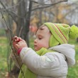 Stock Photo: Baby picking ash berry on branch with serious face outdoors natu