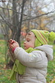 Baby picking ash berry on branch with serious face outdoors natu — Stock Photo
