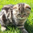 Cute striped kitten on grass outdoors with thinking look — Foto Stock #14458145