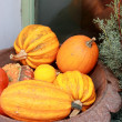 Stock Photo: Yellow pumpkins in basket and fir green branches decoration