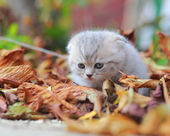 Cute small kitten sitting on autumn bright colorful foliage — Stock Photo