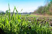 Wild grass — Stockfoto