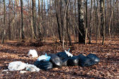 Rubbish in the forest — Stock Photo