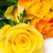 Yellow and orange roses — Stock Photo #28001189