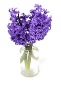 Hyacinth flowers in bottle — Stock Photo