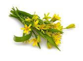 Sarı bahar çiçekleri — Stok fotoğraf