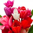 Bunch of red and pink tulips over white — Stok fotoğraf