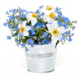 Forget-me-not and narcissus flowers over white — Stock Photo