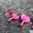 Heart-shaped flowers on wooden surface — Stok fotoğraf
