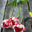 Stock Photo: Colorful tulips on wooden background