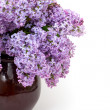 Lilac over white — Stock Photo